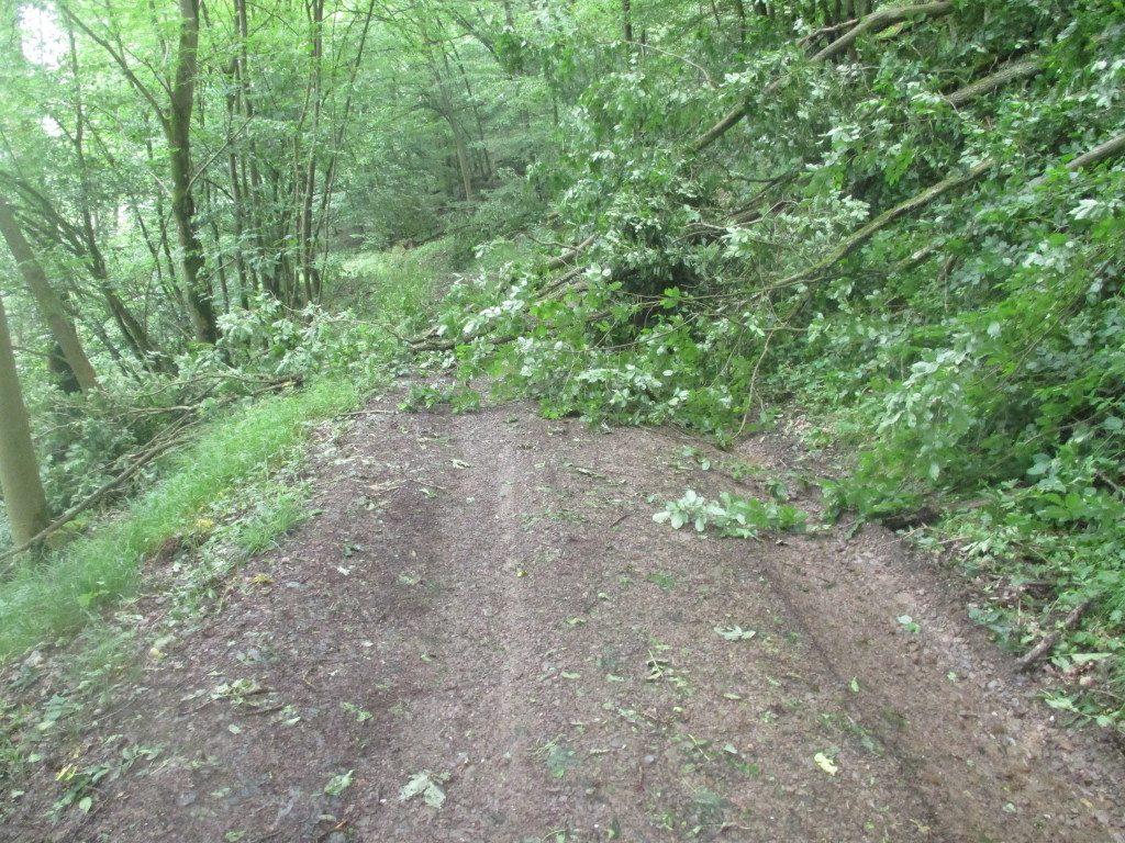 Waldpfad 1